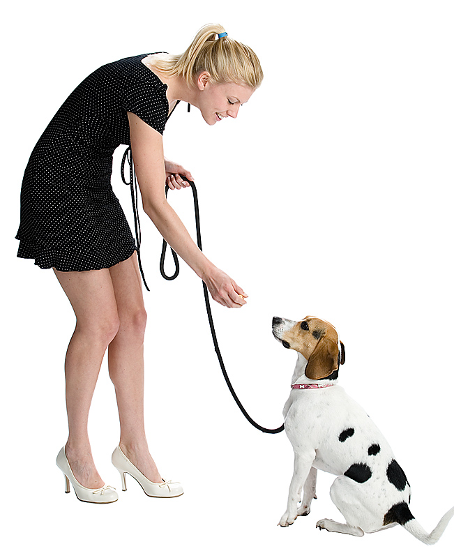 How Do I Train My Dog To Walk Off Leash
