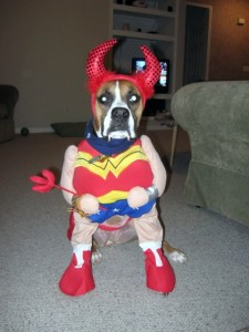Wonder Rubi & Rubi the boxer as Wonder Woman - TheDogTrainingSecret.com
