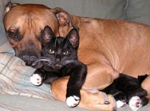 dogs cats can get along. Black Bedroom Furniture Sets. Home Design Ideas