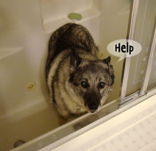thunder storms how to help dog frightened
