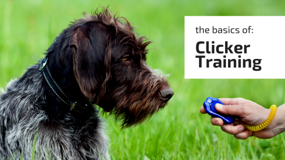 A-Z Guide On Clicker Training Basics