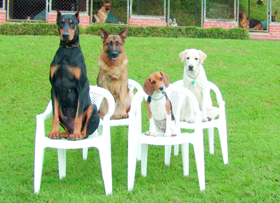 Training Puppies on Building Your Dog Training Foundation   Dog Obedience Training Blog
