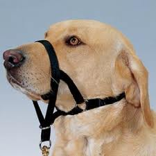 how to utilize the gentle leader and similar head halters in dog training. Black Bedroom Furniture Sets. Home Design Ideas