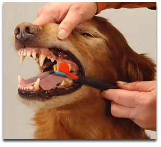 The Importance of Canine Dental Care for the Longevity of Your Best Friend