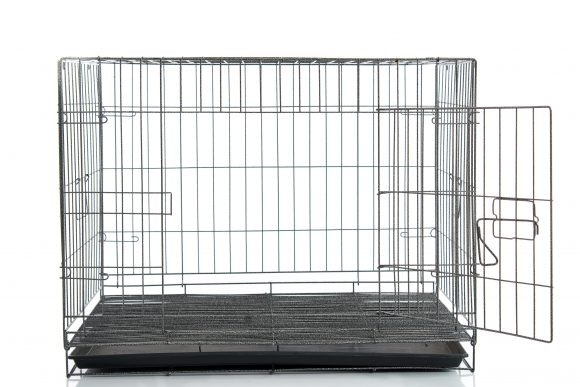 choose the right size crate for your dog
