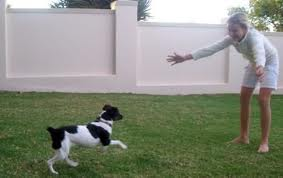 Dog Come when Called , puppy training , dog training, Come Command, Teach Your Dog Come, Getting Dog to Come
