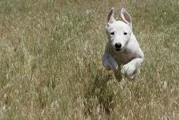 teach your dog to come every time, puppy training, pitbull training
