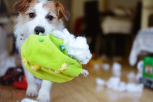 use tear apart dog toys instead of tennis balls