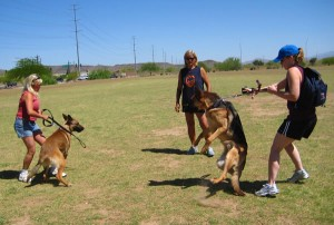 Dog Aggression, dog aggression training