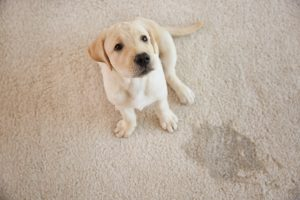 puppy indoor accidents