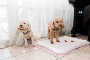 potty pad training