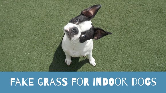 The Synthetic Grass is Always Greener … Grass for Dogs in Apartments