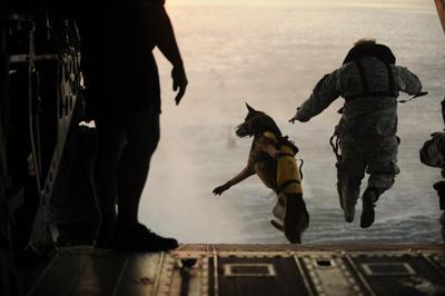 Dog Jumping From Plane
