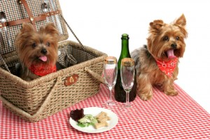 Puppies On A Picnic