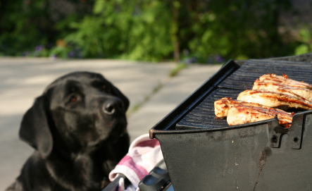 10 Things To Do With Your Dog This Memorial Day Weekend