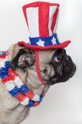 Pug Wearing Patriotic Stuff