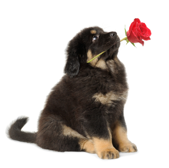 7 Things to do With Your Dog on Mother's Day ...