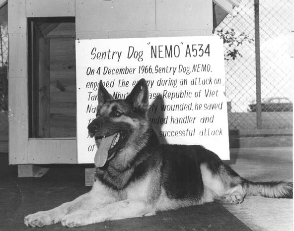 Nemo The War Dog