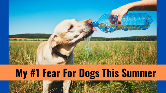 My #1 Fear For Dogs This Summer