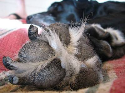 Take Care Of Your Dog S Feet