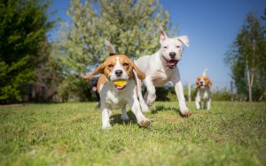 dog play and positive reinforcement