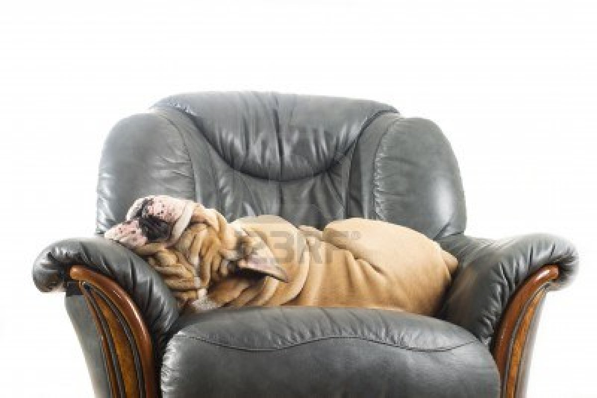 Keeping Your Dog Off the Furniture - TheDogTrainingSecret.com