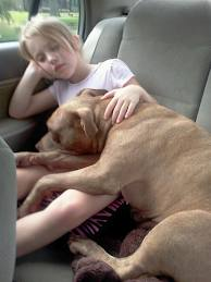 Some Pitbulls are Great with Kids
