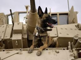 If My Life or My Children's Lives Depend on This Dog I want him Well Trained.
