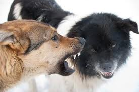Dog on Dog aggression can be Scary!