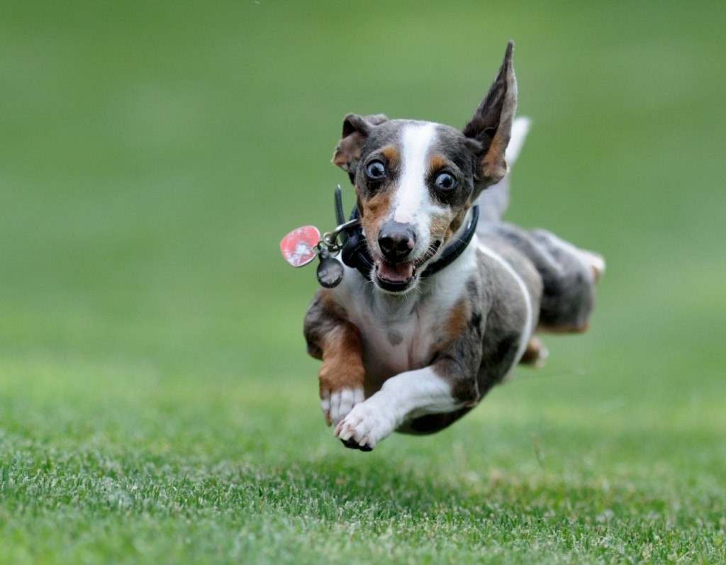 Leaping Dog Pet Food