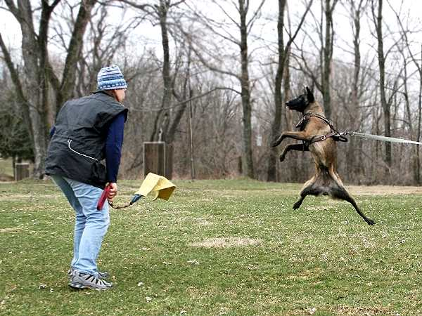 I Have  Dogs Can I Fly