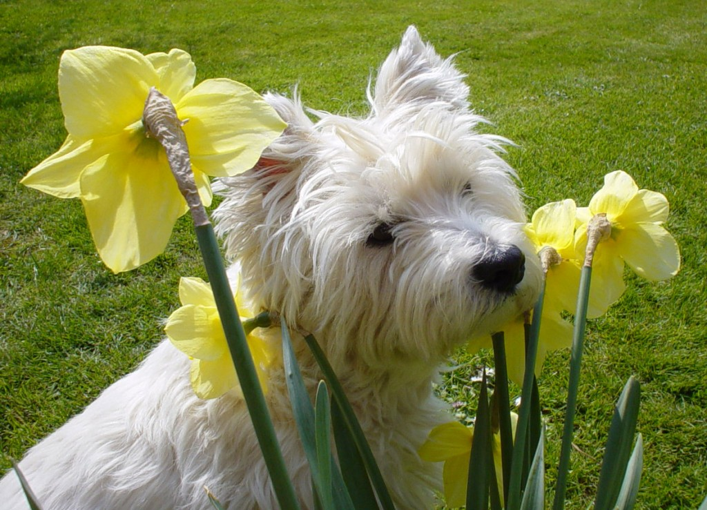 Get Outta My Garden, a Lesson on Keeping Your Dog out of ...