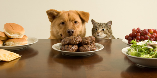 Your Pets Love Being Cooked For!