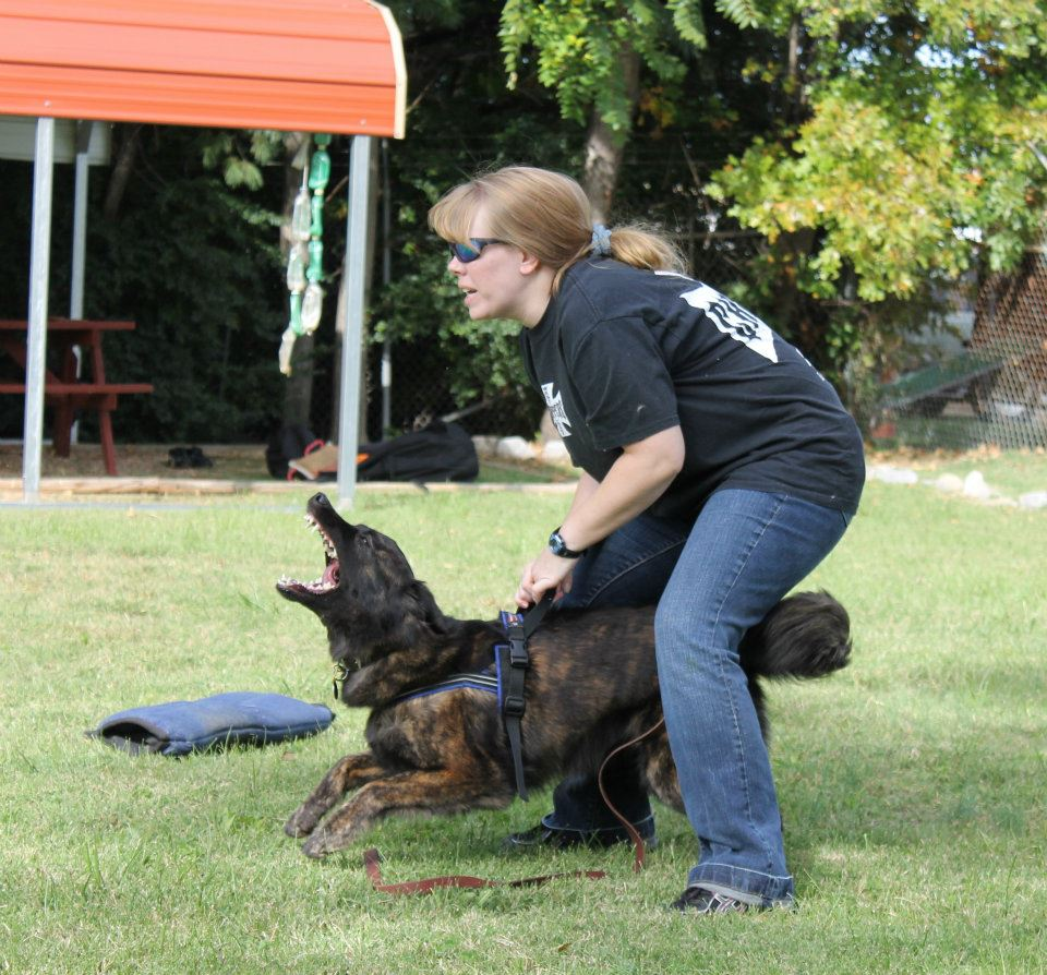 dog aggression training, redirected aggression in dogs