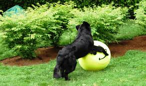 Find Something Your Dog Thinks is SUPER FUN!!