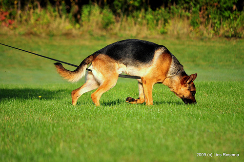 Training Your Dog To Track