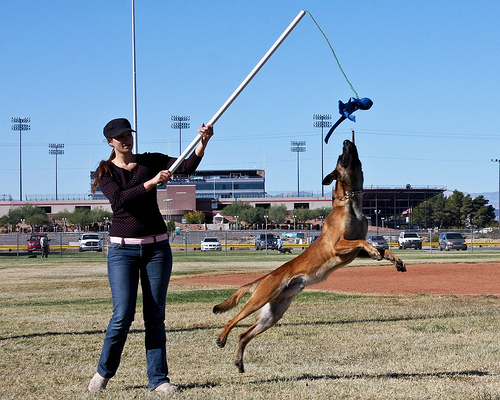 flirt pole dog training Flirt pole what's a flirt best dog gifts, best gifts for dogs, dog gift ideas 2014, dog gift ideas under $10, dog puzzle toys dog training nation is a.