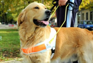 Dogs With Jobs Important Jobs Dogs Have Been Trained To