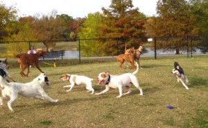 Dogs Having Fun!  Thanks biscuitacres for the photo!