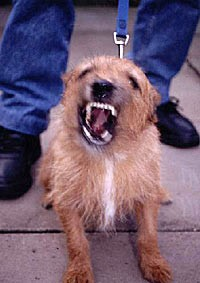 triggers in dog training, dog aggression