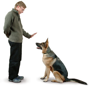 You Also Have to Work on Obedience!