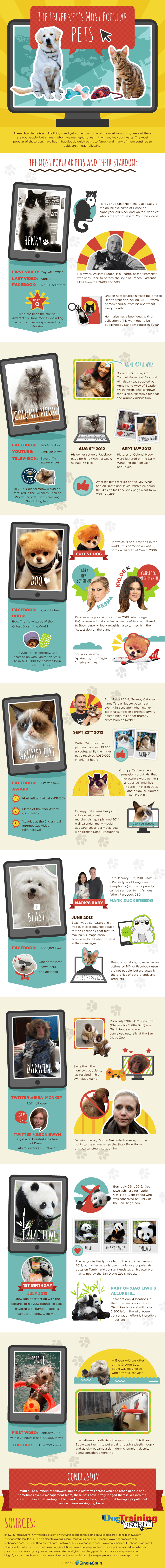 The Internets Most Popular Pets Infographic