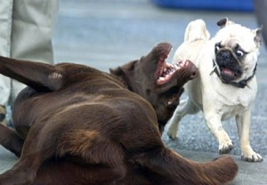 stopping dog aggression, my dog is traumatized, unprovoked dog aggression