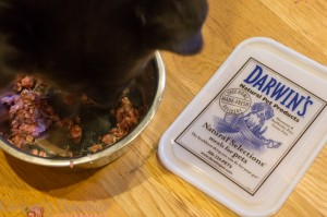 Raw Food for Dogs, Darwin's Pets, Keep the Tail Wagging