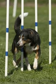 Thanks to Arf Agility for the photo