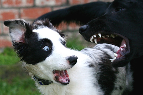 Dog Food Aggression To Other Dogs