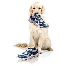 Your Dog Wants Exercise