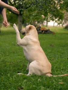 Dog_Training_91335