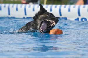 Love This Photo of Her She Looks Like a Shark!  Thanks CWP Photography for this Photo