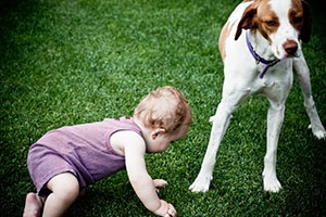 This Picture Shows Signs of Discomfort and Perhaps Fear from This Dog.  Thanks ASPCA for the Photo